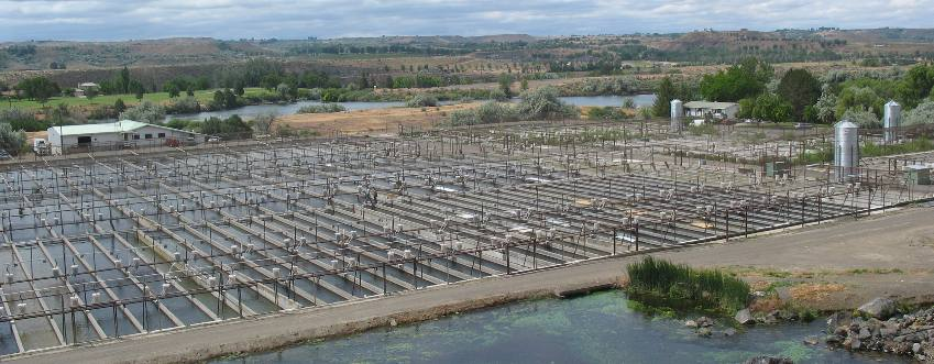 Clear springs foods trout farm buhl for Fish farms in texas
