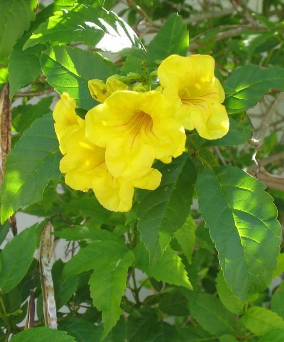 Yellow flower names image beautiful yellow flower names wallpapers n bright yellow flowers names small mightylinksfo
